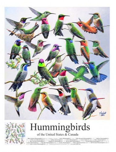 248-Hummingbirds