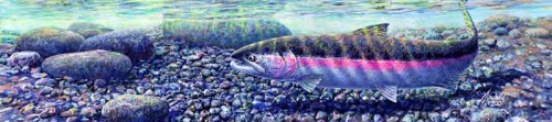 373-steelhead for larger