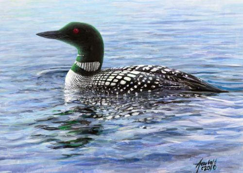 Common Loon for 8 x 10 Nov 17 2013 for ws
