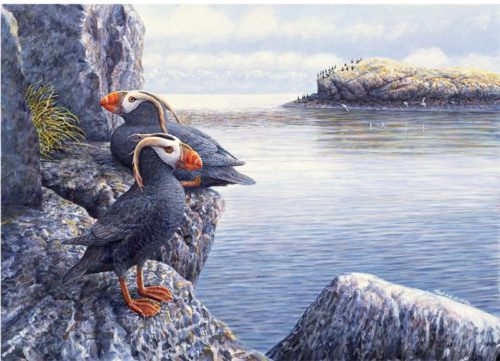 tufted-puffins-12-x-16-for-ws