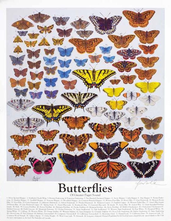 #247 Butterflies 14 x 18