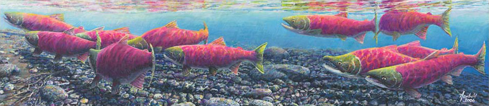 #372 Return of the Sockeye (large)
