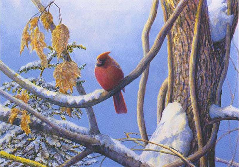 #202 Cardinal