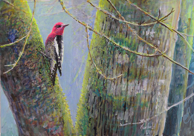 #151 Red-breasted Sapsucker