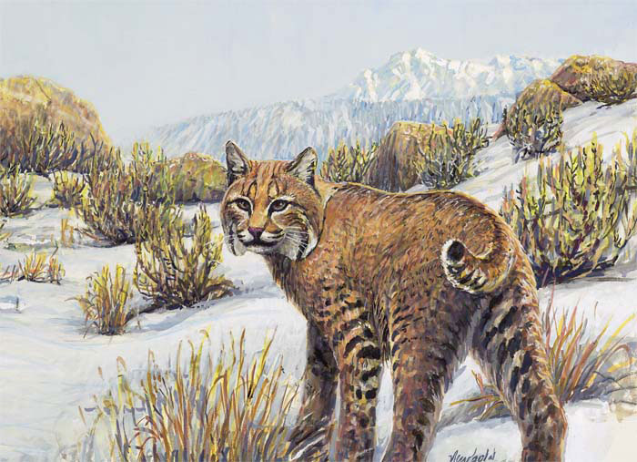 #276 Bobcat in the Shrub-steppe