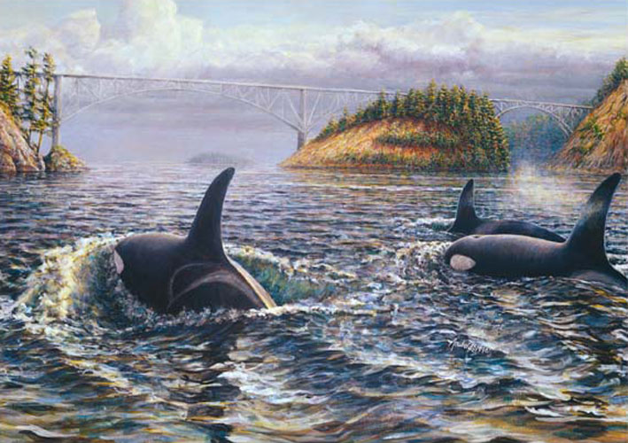 #354 Orcas at Deception Pass