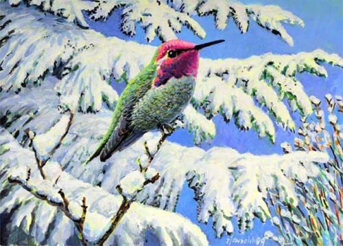 #89 Anna's Hummingbird
