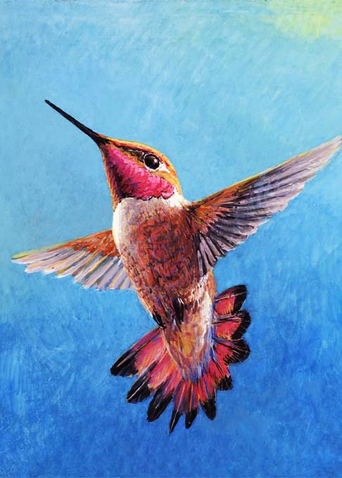 #83 Rufous Hummingbird