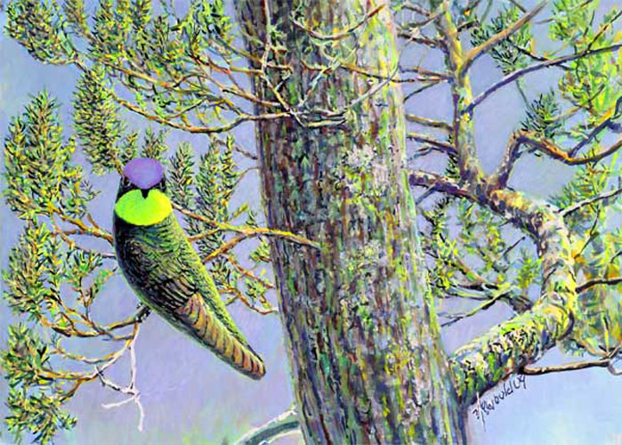 #15 Magnificent Hummingbird