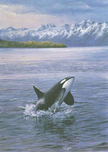 #7 Breaching Orca