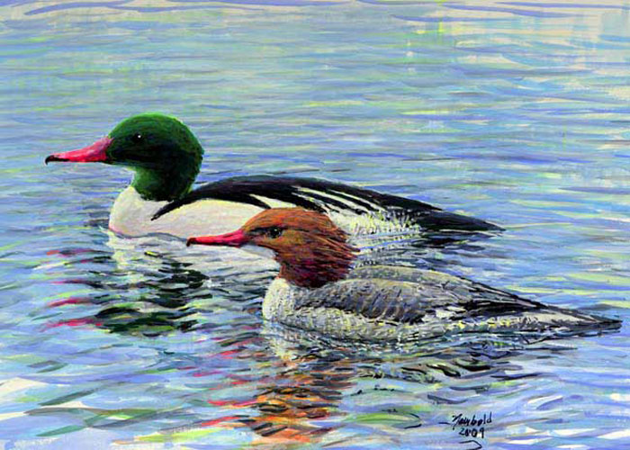 #90 Common Mergansers