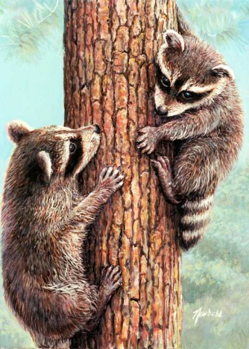 #188 Who's idea was this? (two Raccoons)