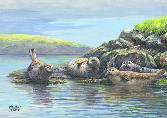 #16 Harbor Seals