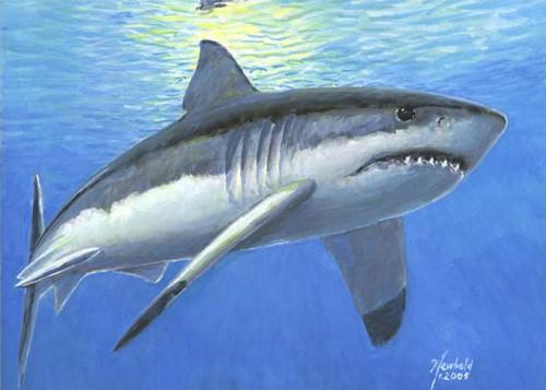 #2 White Shark