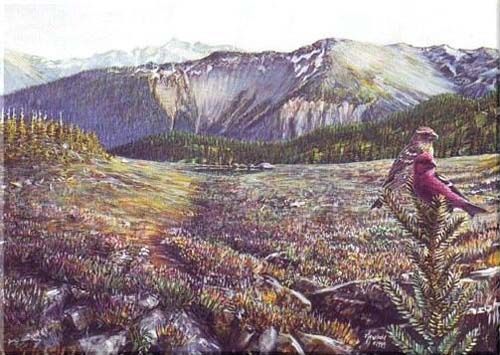 #69 Crossbills in the High Country