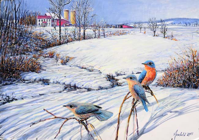 Painting--Eastern Bluebirds in a Pennsylvania (Montgomery County) snow