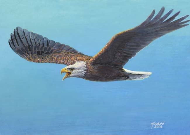 Bald Eagle painting by Ed Newbold