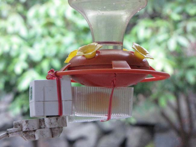 Hummingbird feeder with warming device by J. Pollack