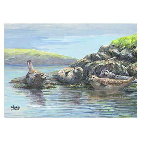 NC Series 1 #5 Harbor Seals