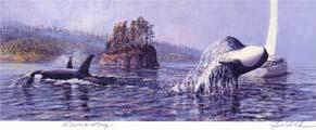 #185 Showboating (Orcas & Sailboat)