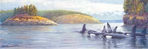 #186 Orcas in the Salish Sea