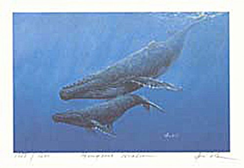 #168 Humpback Whales