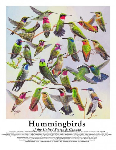 #114 Hummingbirds of the US & Canada