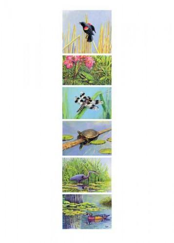 #280 Wetlands