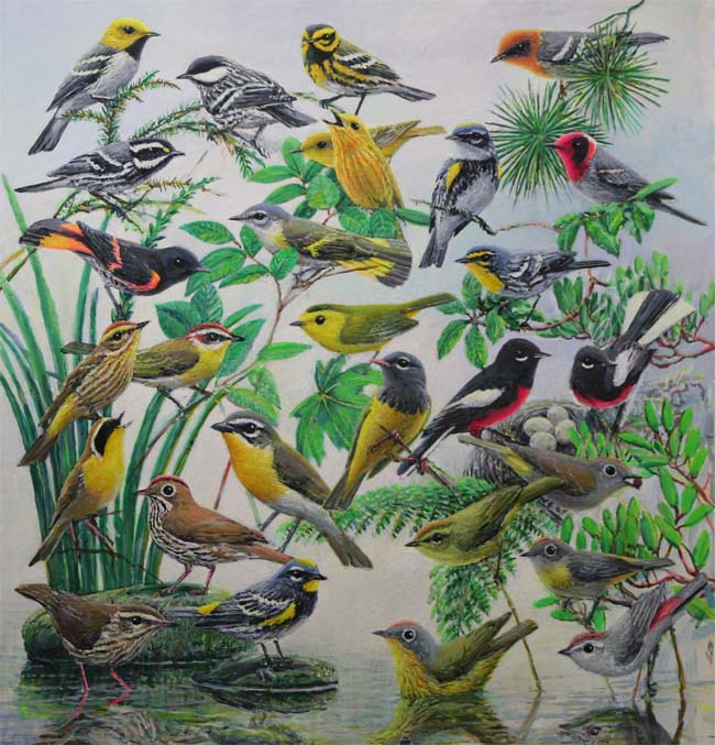 Warblers of the West, painting by Ed Newbold