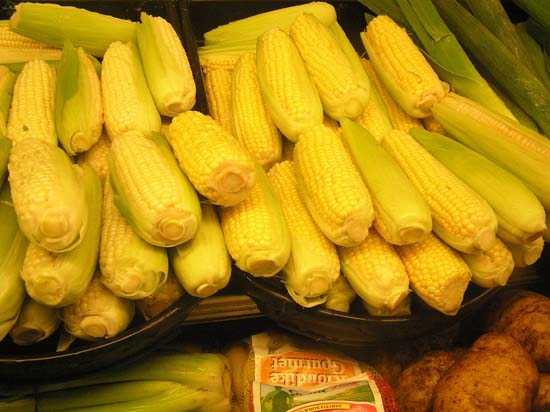 Ears of Corn in a supermarket