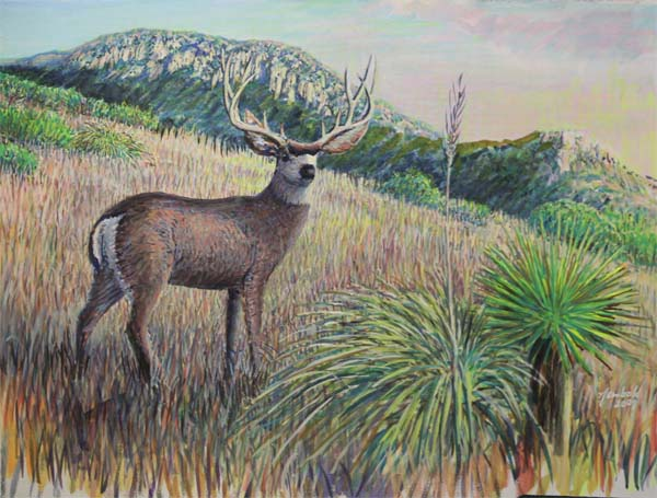 Mule Deer buck in mountains in the New Mexico bootheel
