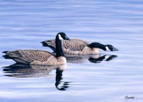 #86 Canada Geese
