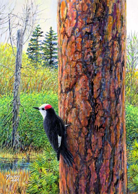 "#427 White-headed Woodpecker (12 x 16"")"