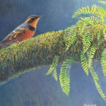Varied Thrush original  SOLD