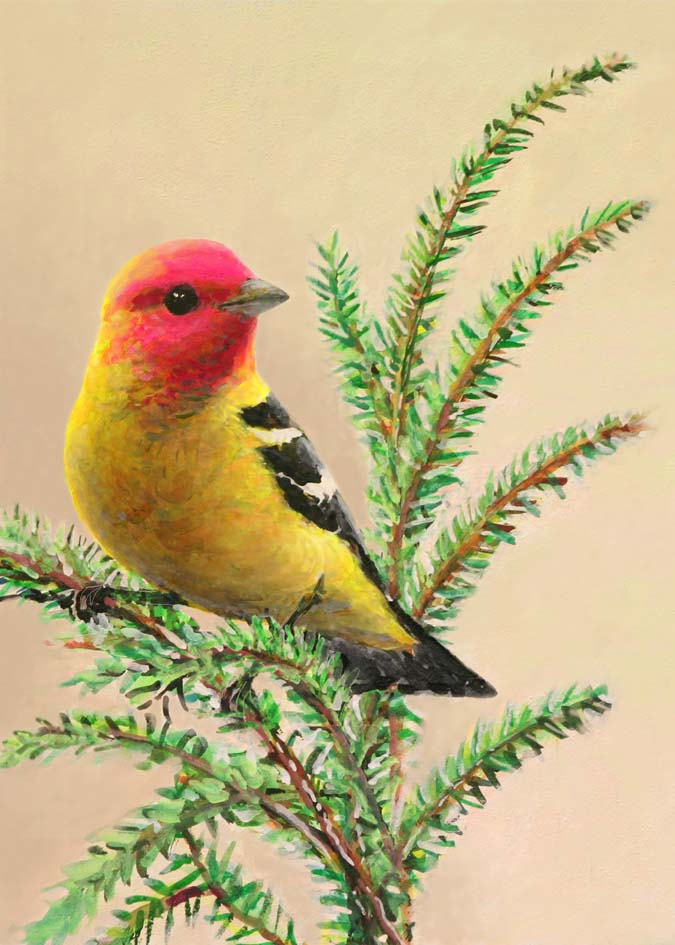 #68 Western Tanager