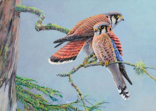 American Kestrels, painting by Ed Newbold