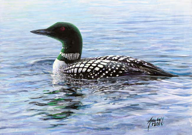 Common Loon, painting by Ed Newbold