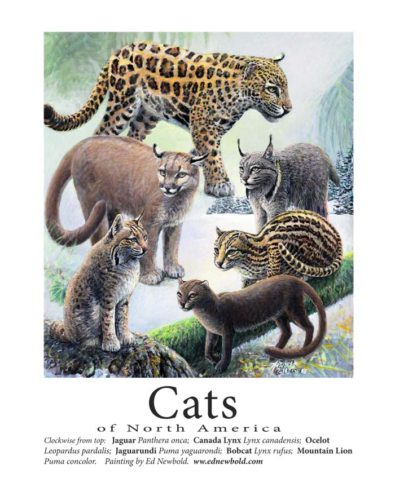 cats-x-2-miniposters-0ctober-2016-for-ws