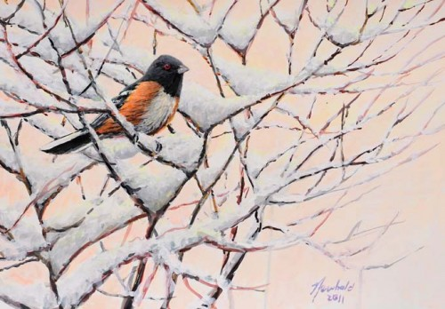 Spotted Towhee painting by Ed Newbold