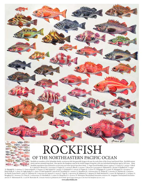 #256 Rockfish of the Eastern Pacific 14 x 18