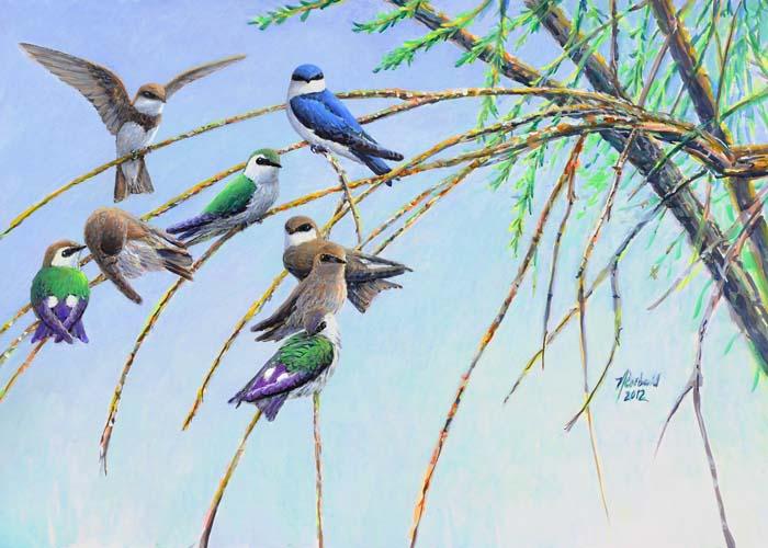#416 Swallows