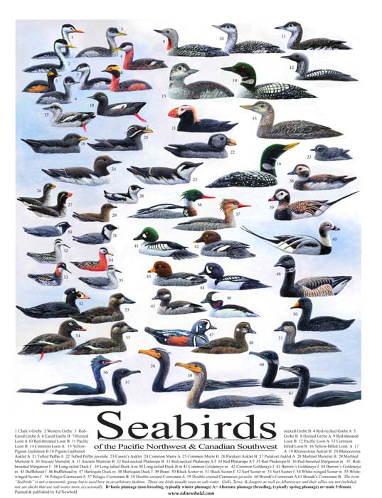 #266 Seabirds of the Northwest 14 x 18