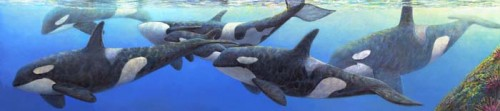 #147 Orcas (horizontal)