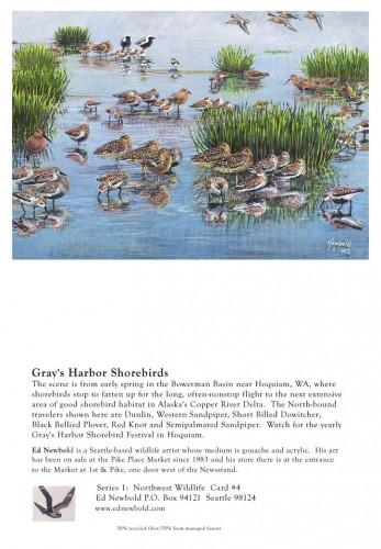 NC Series 1 #4 Grays Harbor Shorebirds
