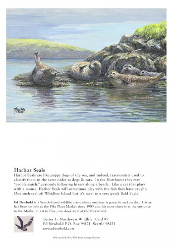 NC Series 1 #5 Harbor Seals