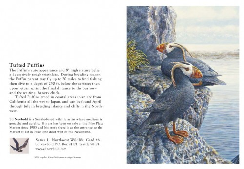 NC Series 1 #6 Tufted Puffins