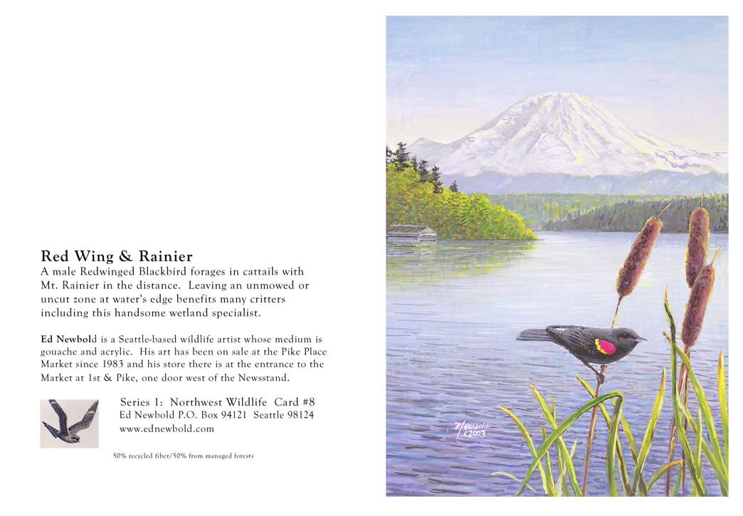 NC series 1 #8 Red-wing & Rainier