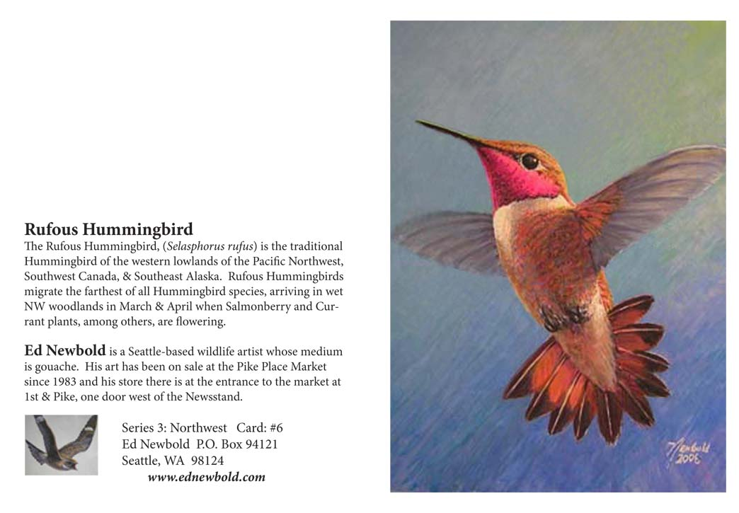 NC series 3  # 6 Rufous Hummingbird