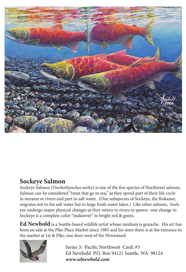 NC Series 3 #5 Sockeye Salmon