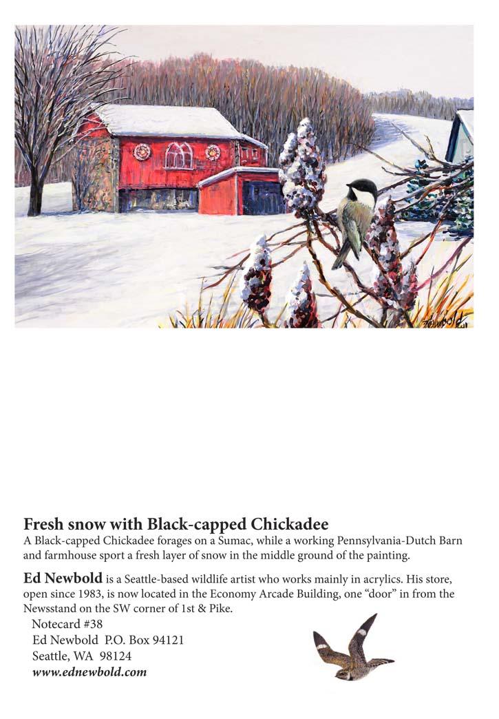 NC #38 Fresh snow with Black-capped Chickadee